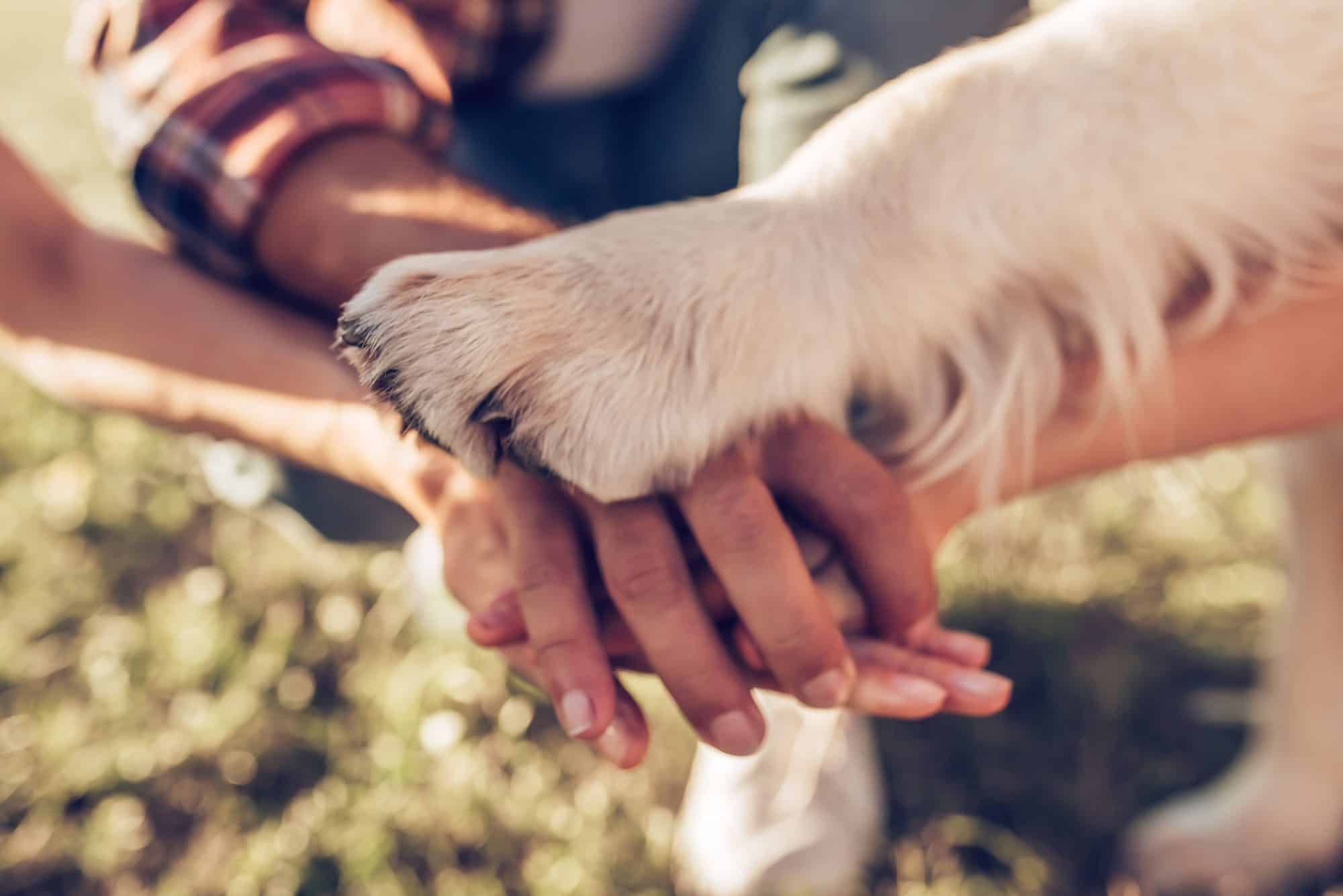 Dog paw on top of hands.