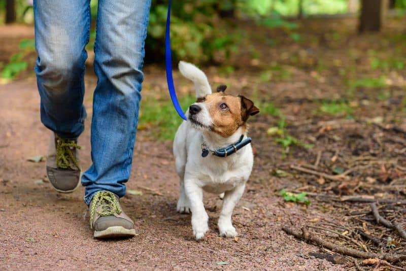 Auburn, CA dog walking etiquette