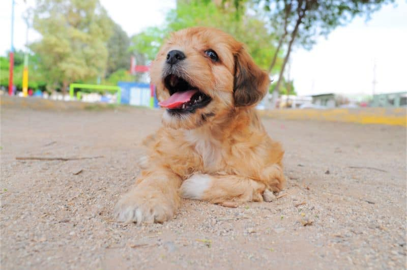 Puppy outside in the sand.
