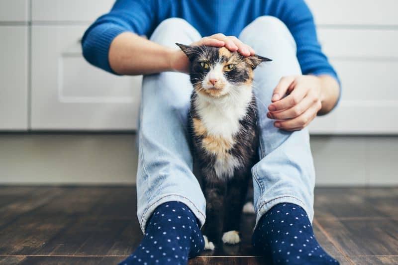 Auburn, CA cat sitting between owners feet.