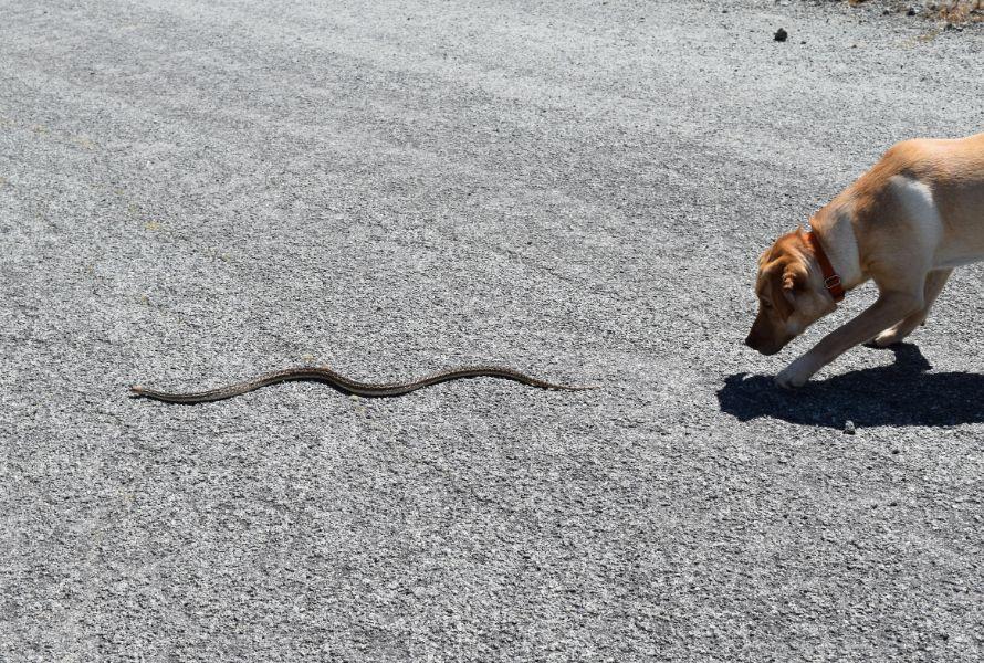 Dog near snake.