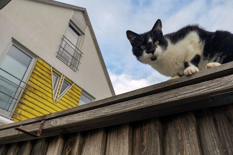 Auburn, CA cat on a fence.