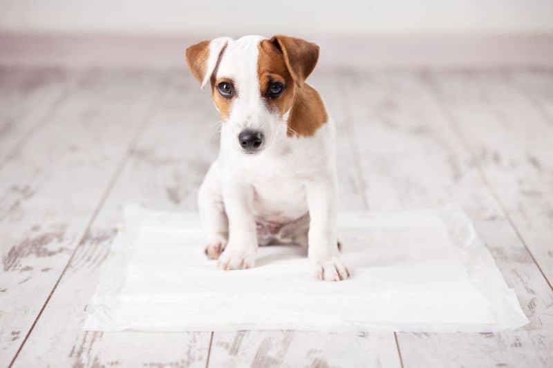 Auburn, CA dog house training.
