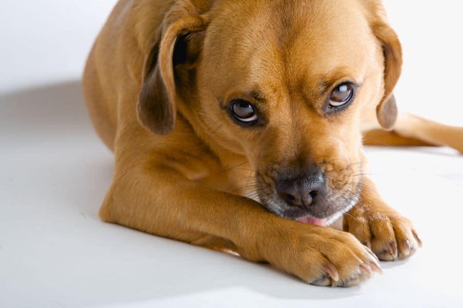 Auburn CA dog with smelly paws