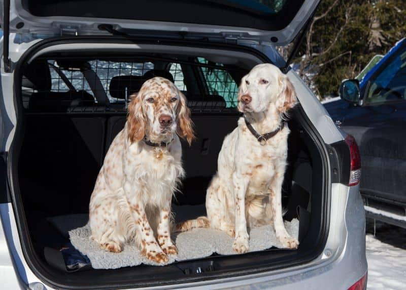 Auburn CA safe dogs in car