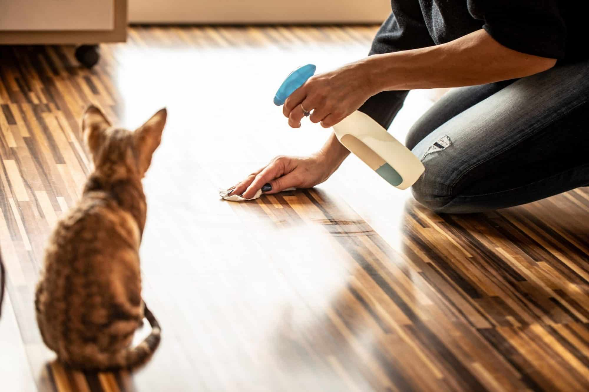 A cat watches a woman clean the floor.