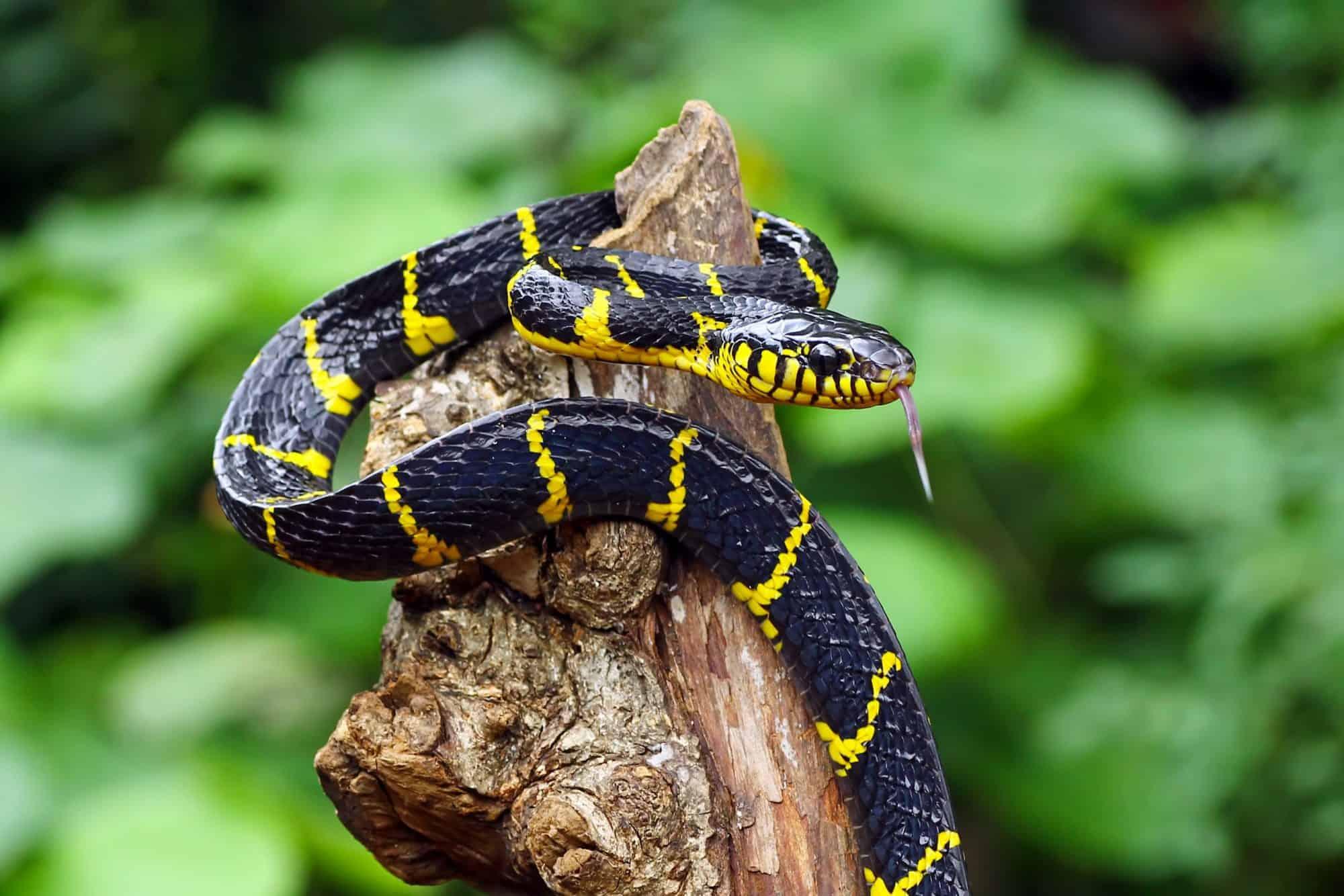 A snake on a tree branch.