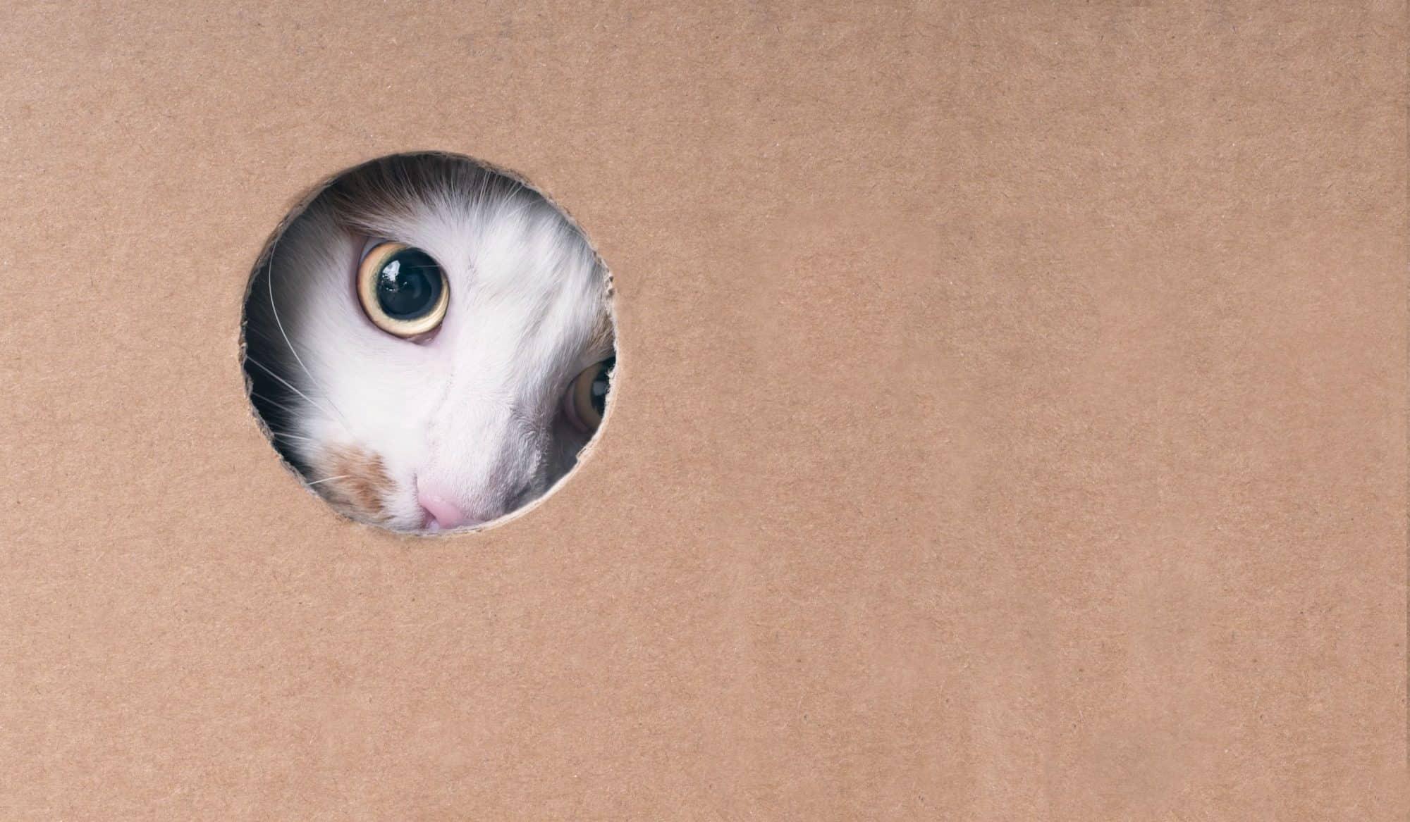 Auburn cat in a catio.