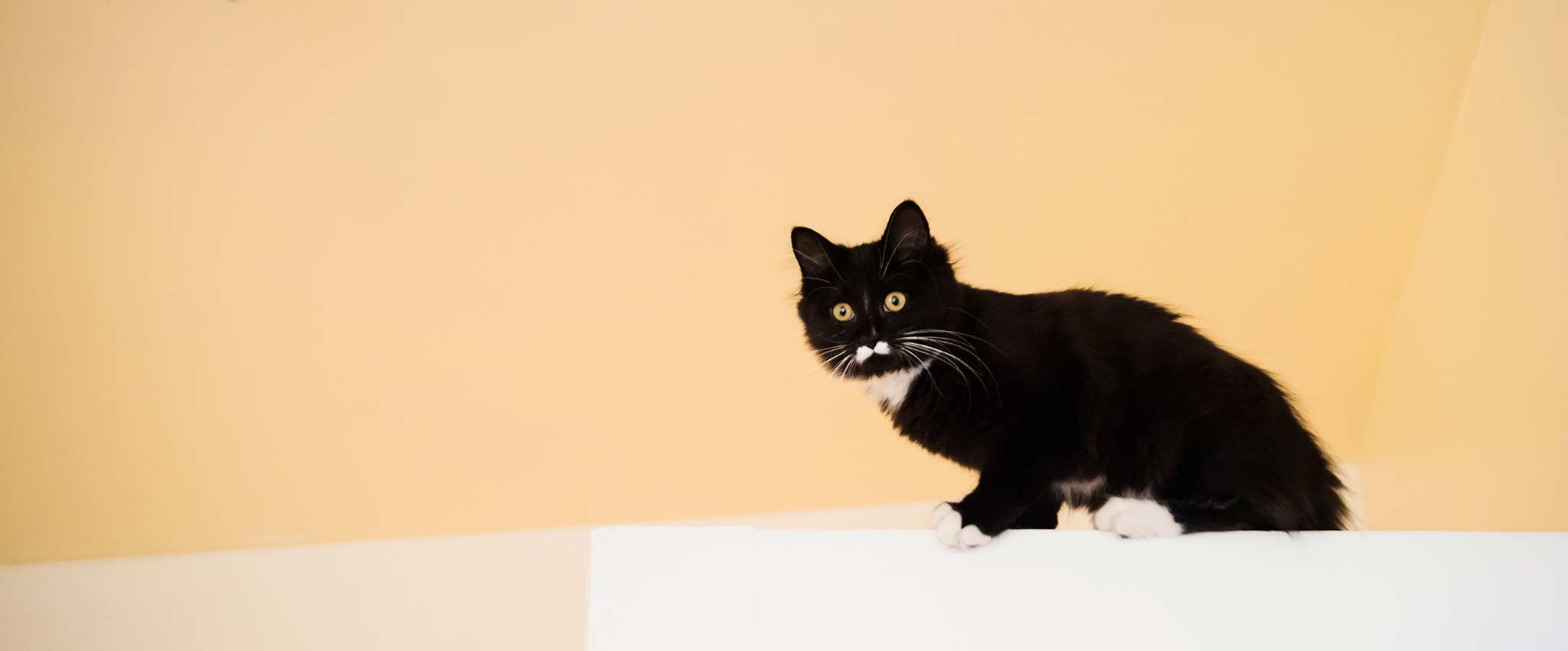 A small black cat on a counter