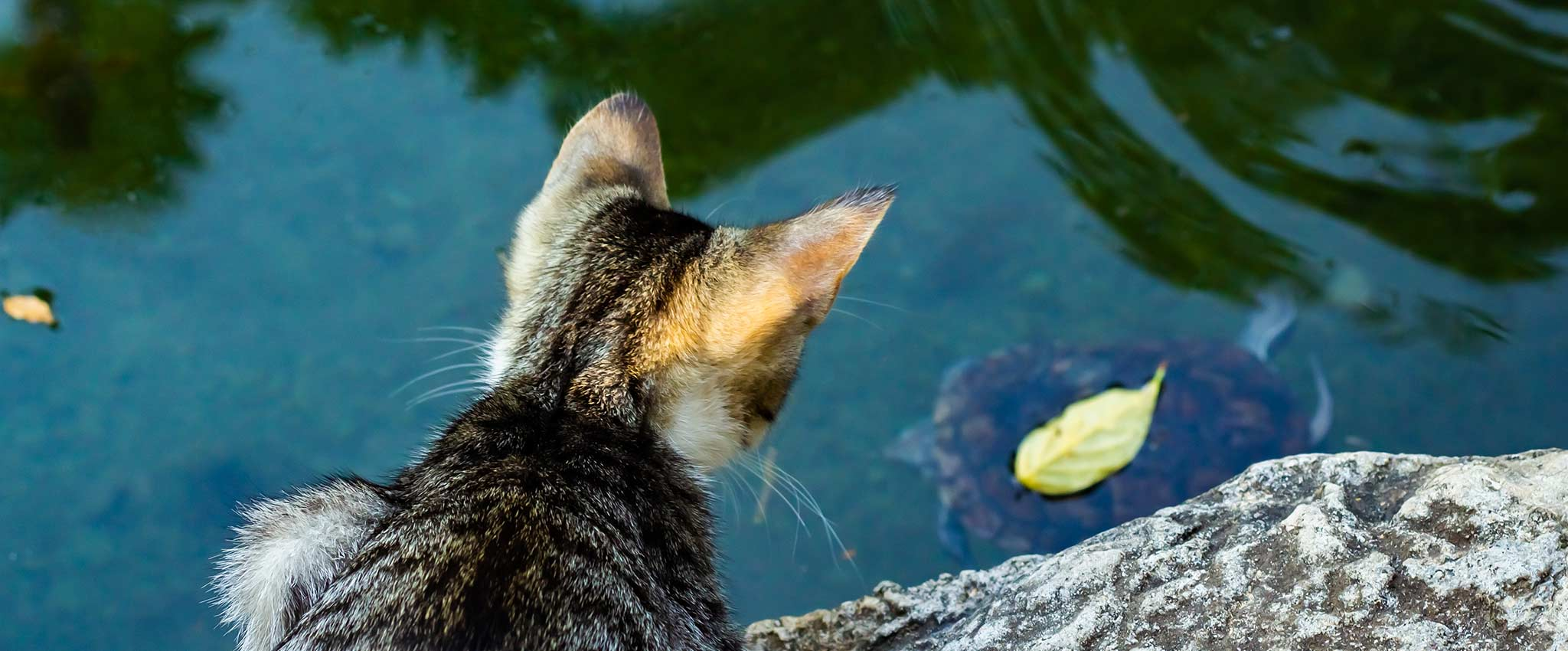 A cat next to a stream