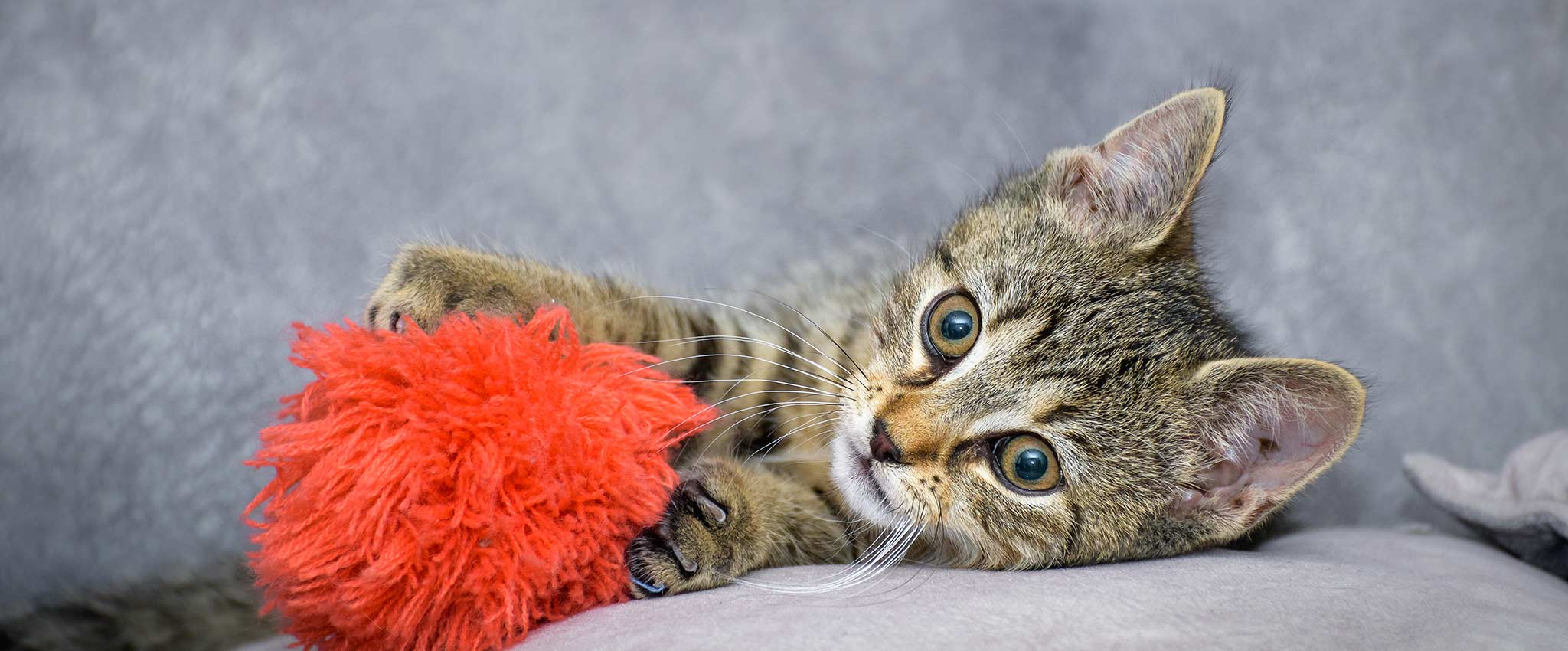 Cat playing with a pompom