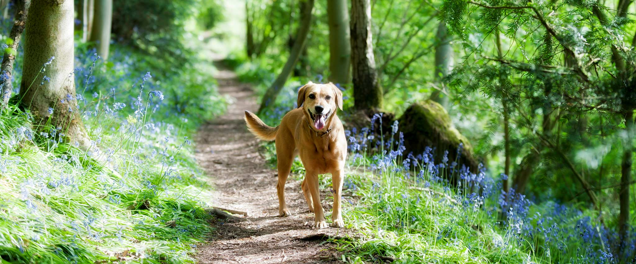 A dog on a running path